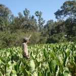 Why African Farmers Must Consider Drought Tolerant Crops — Global Issues