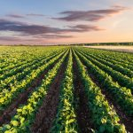 How IoT is being used for Australian agriculture in 2019