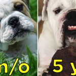 We Wanna See Your Pet's Best Glow-Up Pics