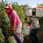 Migrant Farm Workers, the Main Victims of Slave Labour in Mexico — Global Issues