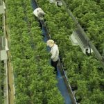 Canopy Growth to acquire U.K. skin-care company This Works
