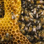 Long Life to Their Majesties, The Bees! — Global Issues