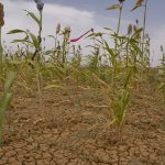 Drought, Disease and War Hit Global Agriculture, Says U.N. — Global Issues