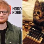 Ed Sheeran Mourns The Death Of His Cat Graham