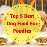 Top 5 Best Dog Food For Poodles