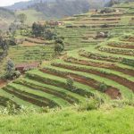 Why Rwanda is a Great Green Growth Investment — Global Issues